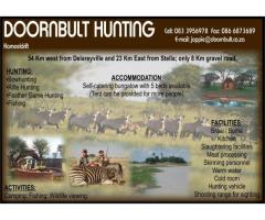 Doornbult Hunting
