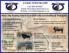 Blue Chip Hunting Safaris