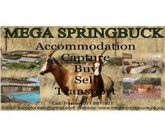 Mega Springbuck