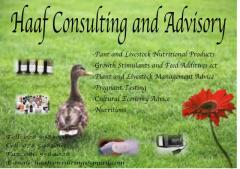 Haaf Consulting and Advisory