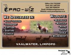Pro-Wiz Group