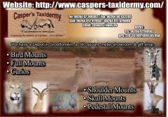 Casper's Taxidermy