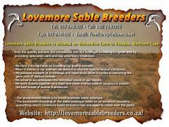 Lovemore Sable Breeders