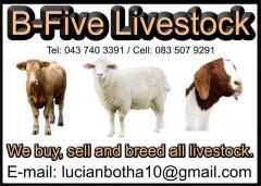B-Five Livestock