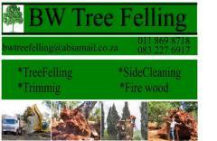 BW Tree Felling