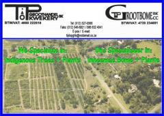 Tip Top Groothandel Kwekery / Tip Top Groot Bome