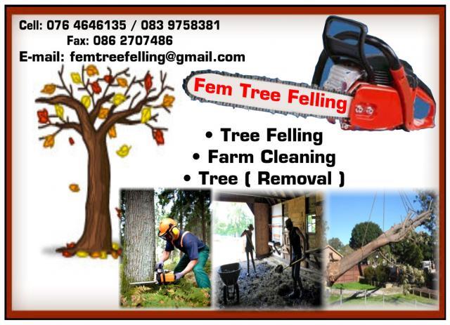 Fem Tree Felling